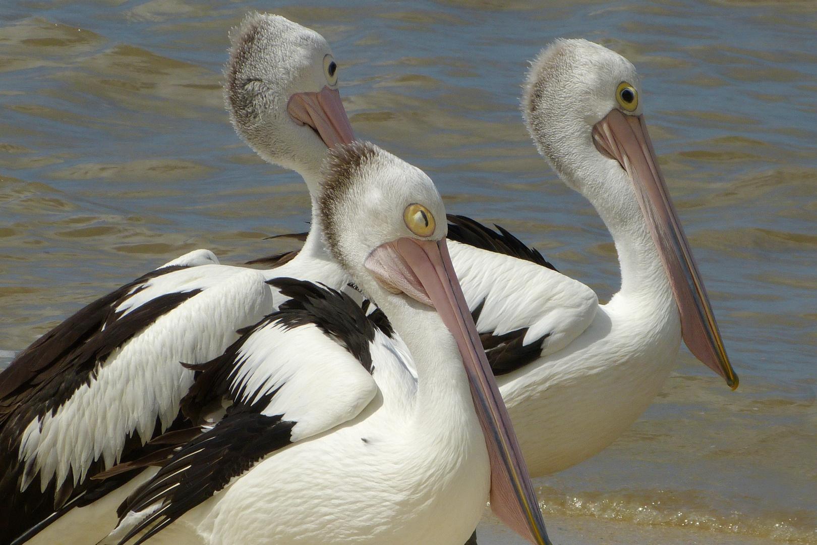 Wildlife Australien