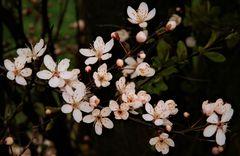 Wildlife-Blossoms