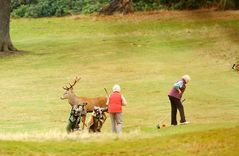 Wildlife-Golf