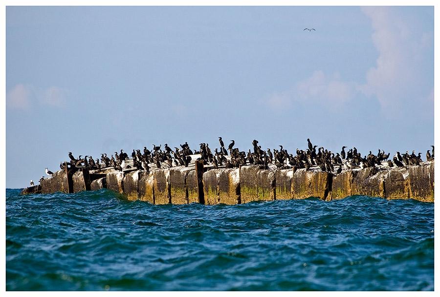 Wildlife Helgoland .....