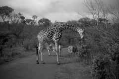 Wildlife in Südafrika