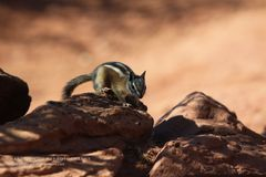Wildlife in Zion National Park