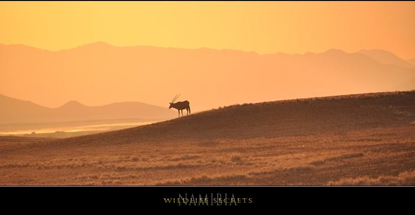 Wildlife secrets