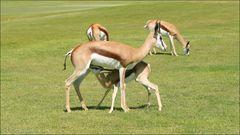 Wildlife South Africa
