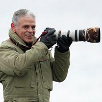 Wildlife - Vogelfotografie