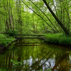 Wildnis in der Flussaue