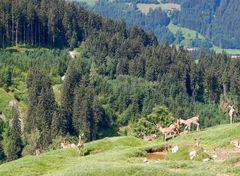 Wildpark-Aurach / Tirol
