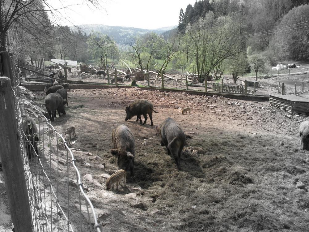 Wildpark in Heigenbrücken