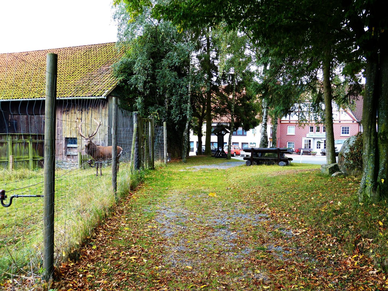 Wildpark in Rinteln-Friedrichswald