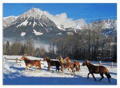 WildPferde ;-)