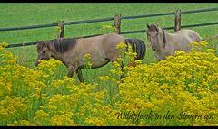 Wildpferde in den Steverauen