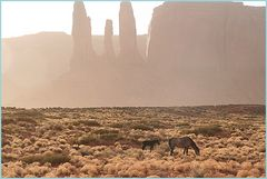 Wildpferde Ü21 000 Klicks mit Soundtrack ARIZONA