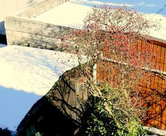 Wildrose: Schatten auf 6 Flächen