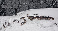 Wildrudel im Schnee!