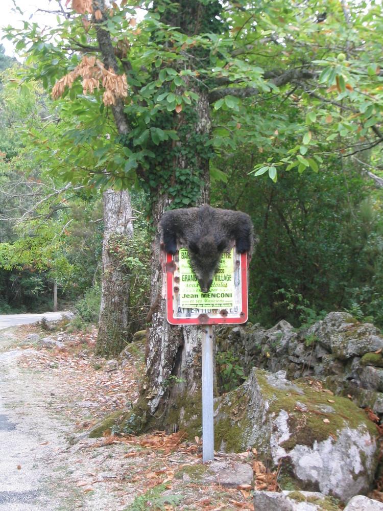 Wildschwein. Typisch (Korsika)
