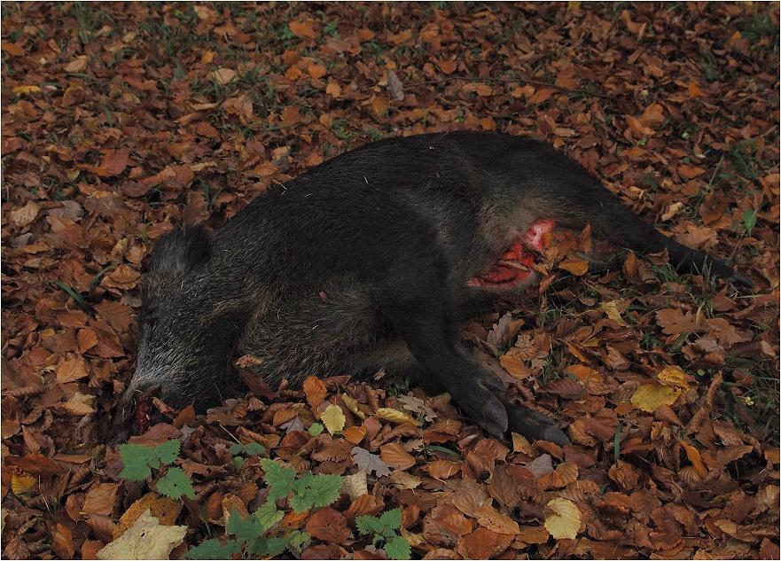 Wildschweinleber schmeckt lecker!