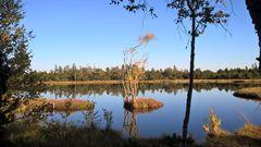 Wildsee am Kaltenbronn