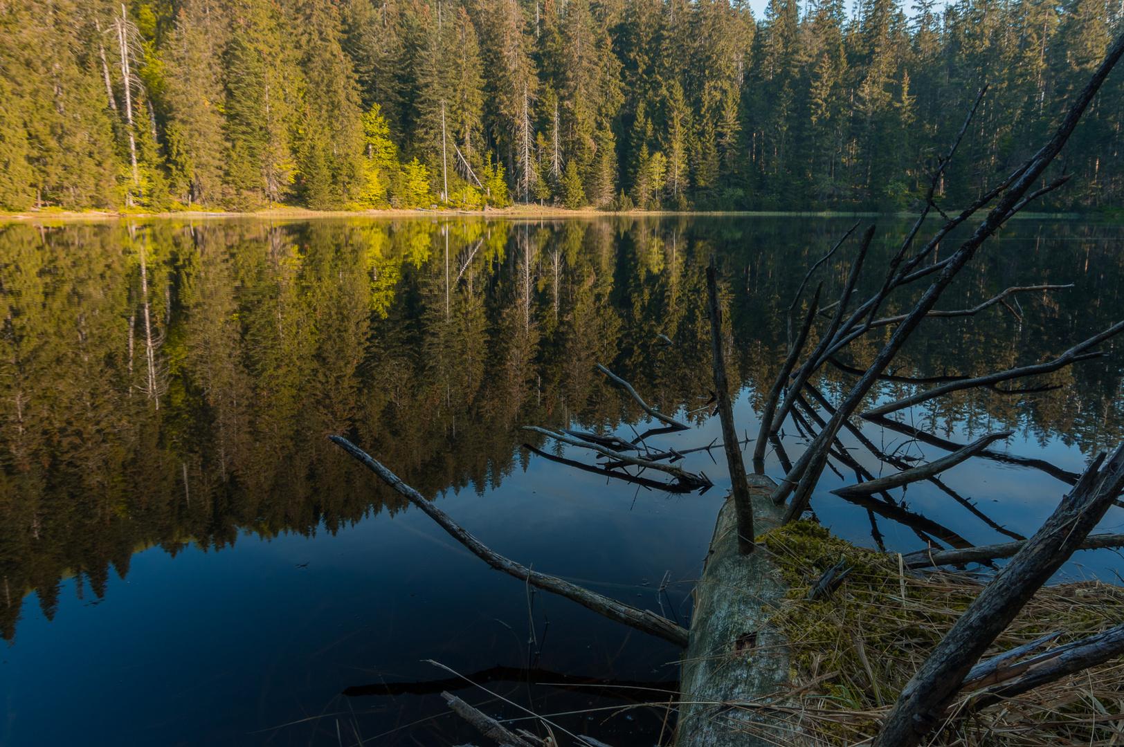 Wildsee im Schwarzwald