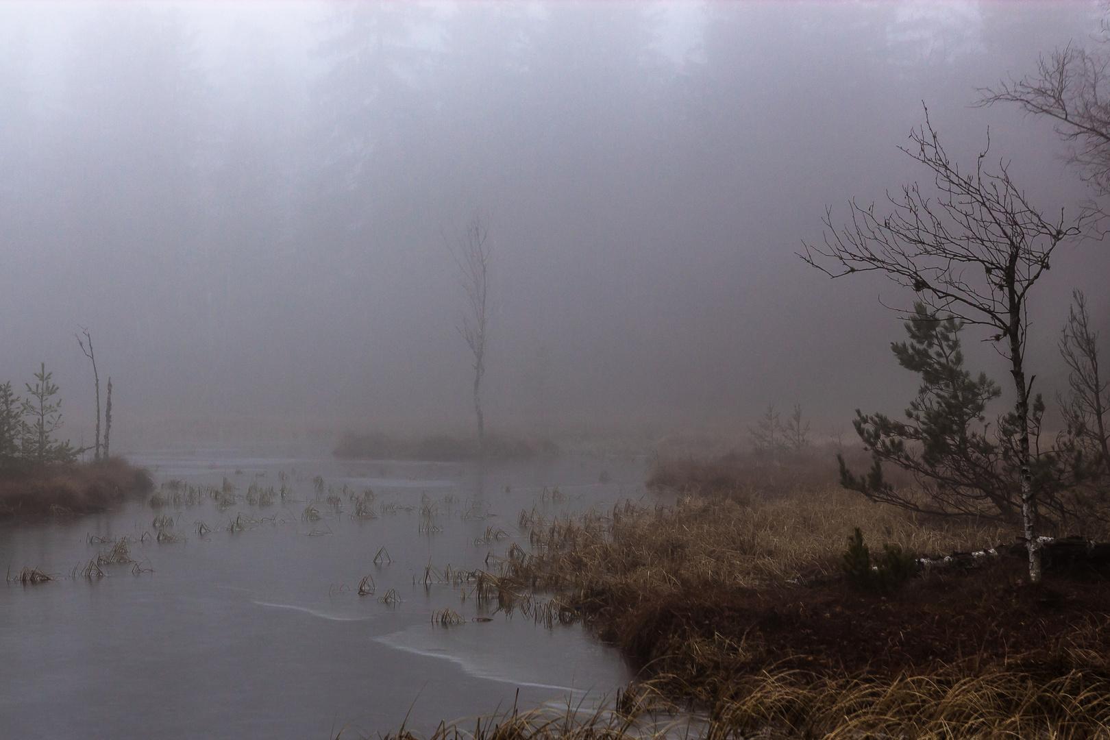 Wildsee (Kaltenbronn) Winternebel