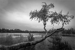 Wildseemoor (I)