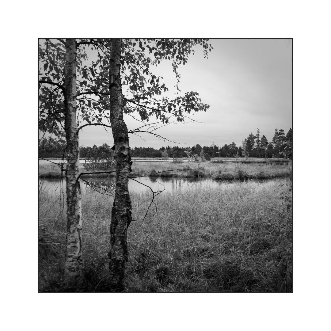 Wildseemoor (II)