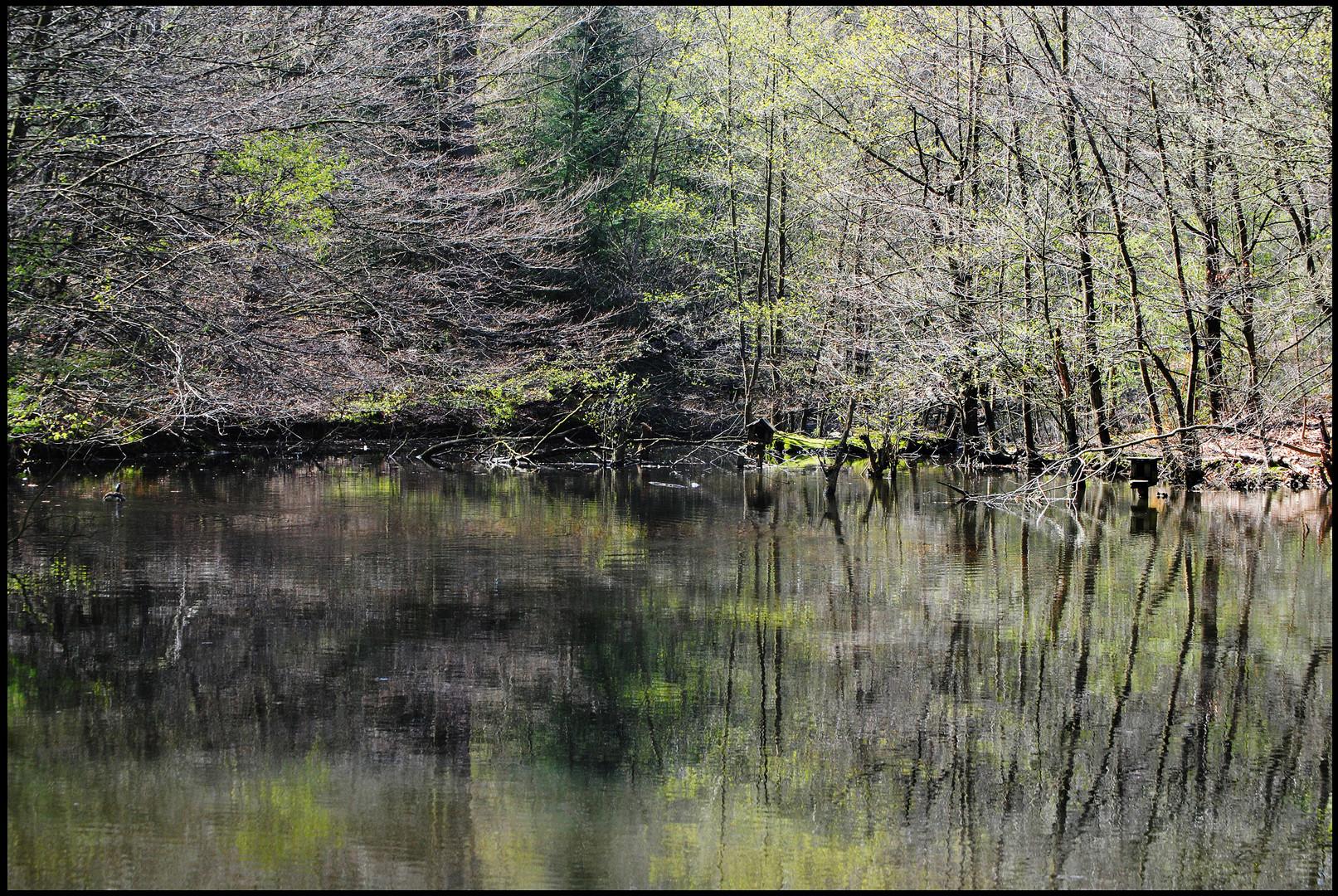 Wildwald Voßwinkel April 2010