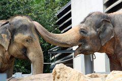 Wilhelma - Elefanten: Kopf hoch, Großer!