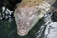 Wilhelma - Krokodil