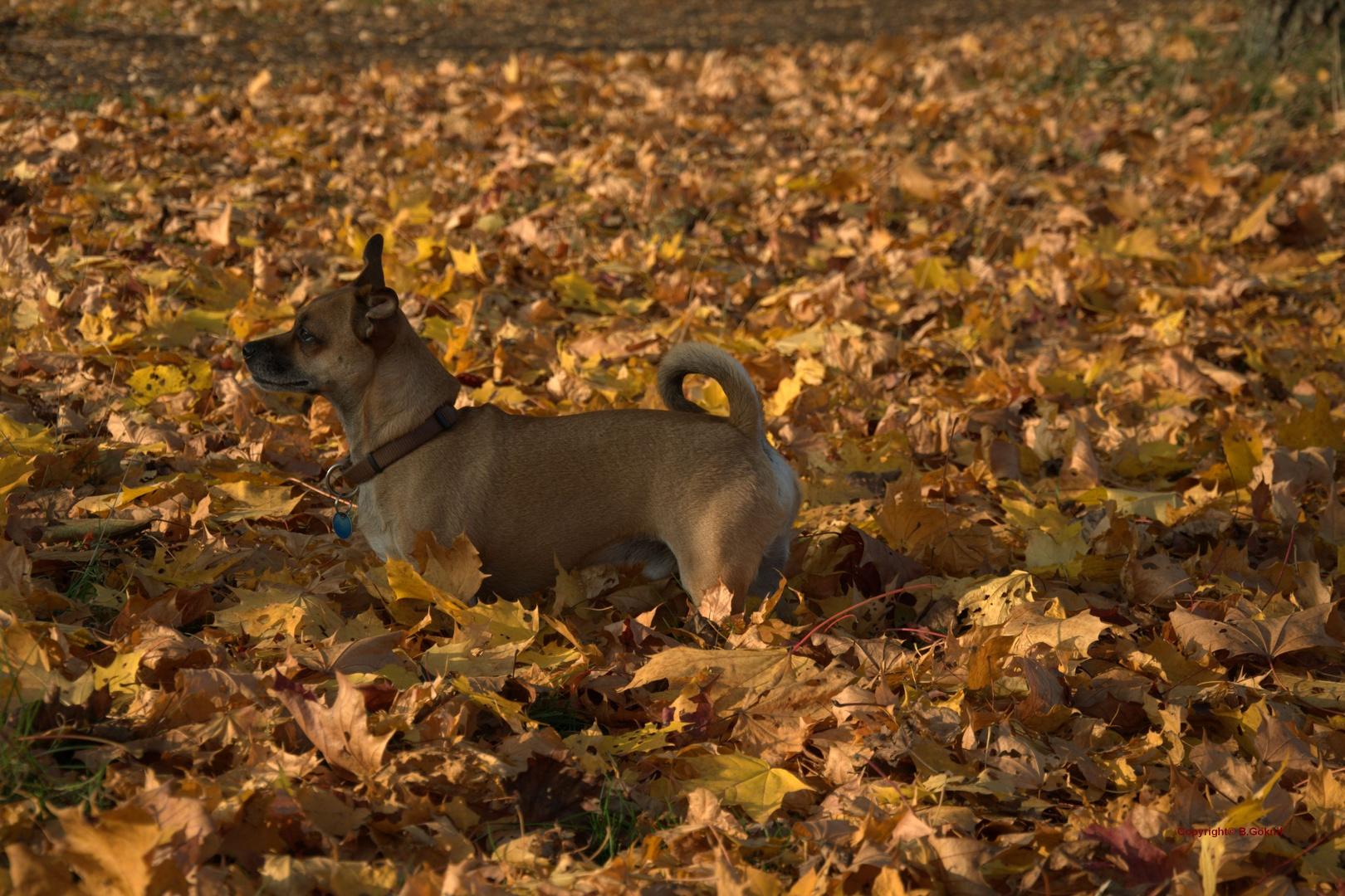 Willi, Herbst im Nordpark