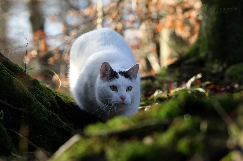 Willi war auch mit im Düsterwald