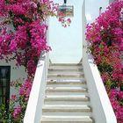 Willkommen auf Lanzarote...