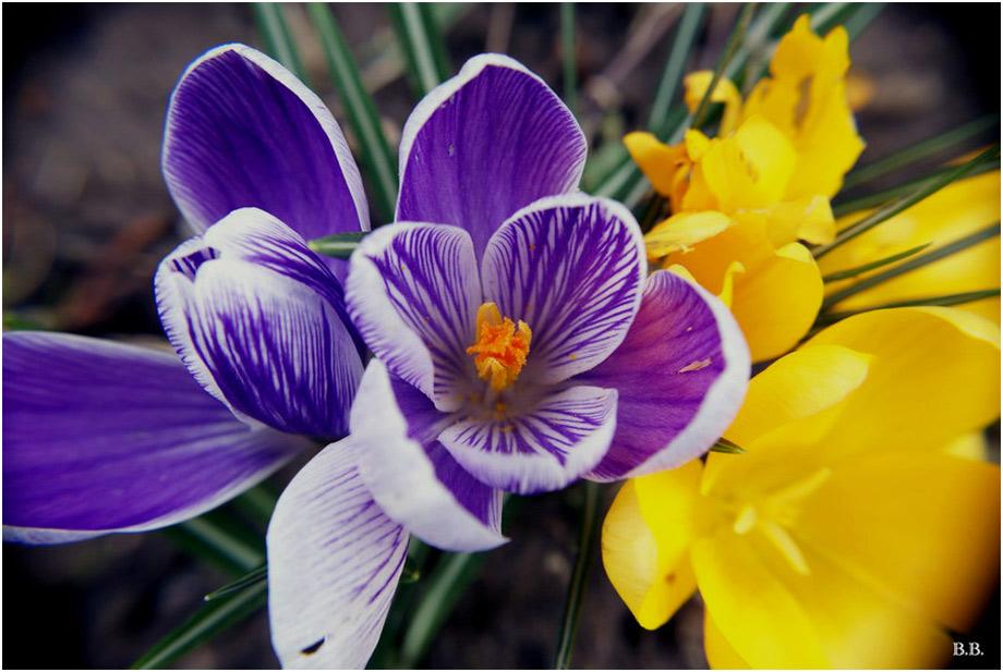 ~Willkommen Frühling~