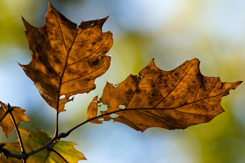 Willkommen Herbst