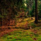 willkommen im märchenwald