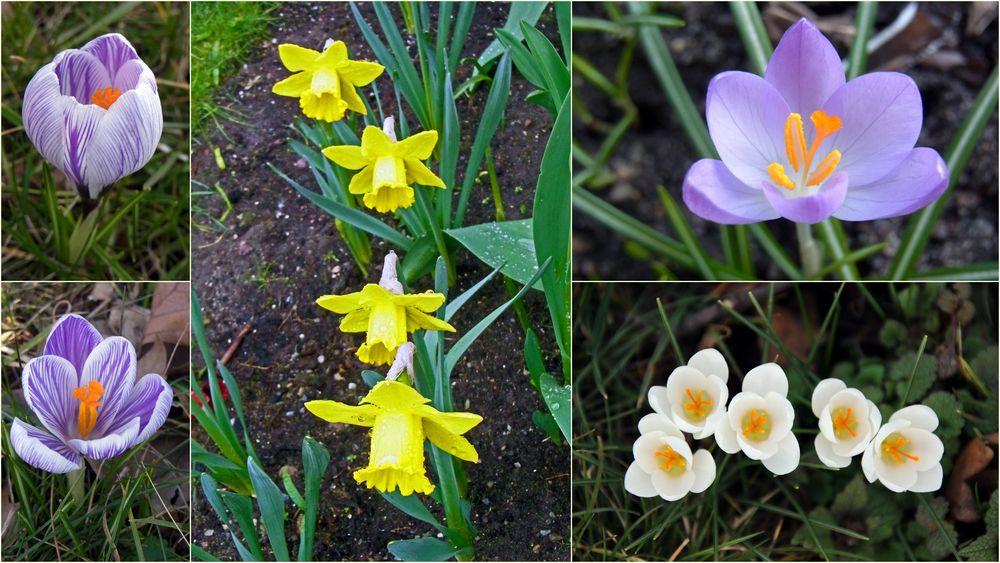 Willkommen, lieber Frühling!