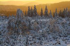 Willkommen Nationalpark Schwarzwald