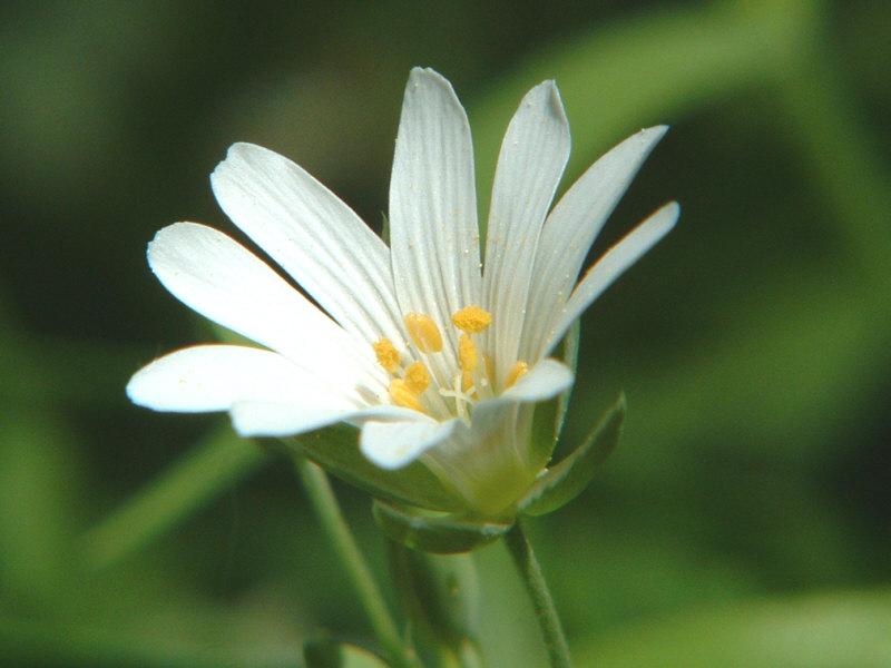 Willkommensgruss einer Blüte...