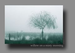 Willow on a misty morning - colour