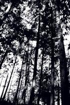 Willy m'a prêté sa forêt