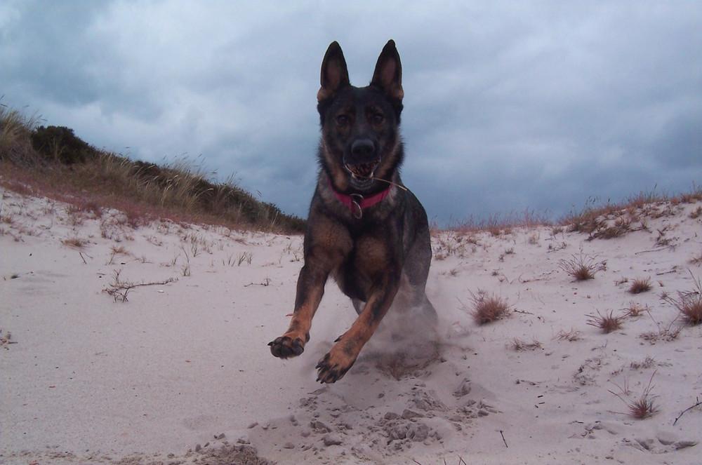 Wilma in den Dünen