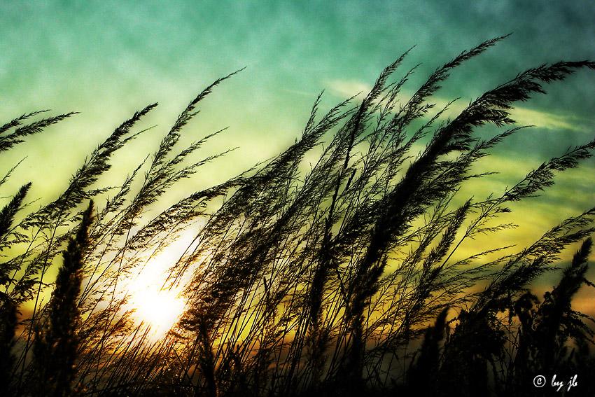 ~Wind~