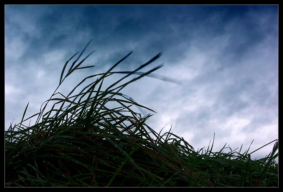 Wind bewegt ...