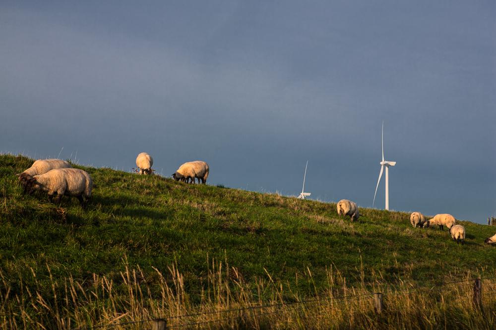 Wind-Bio-Energie