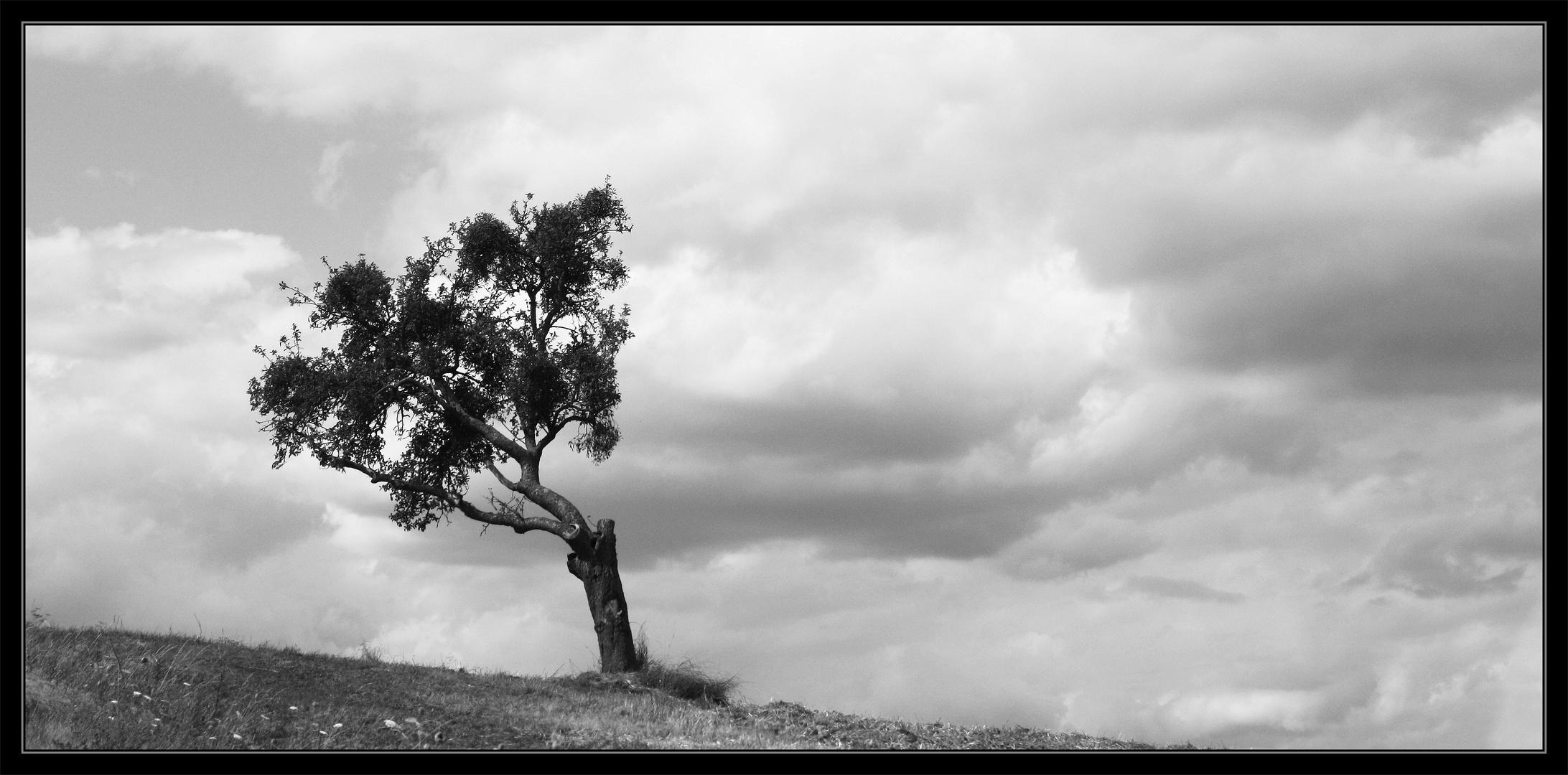 Wind geformt