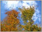 Wind in den Bäumen