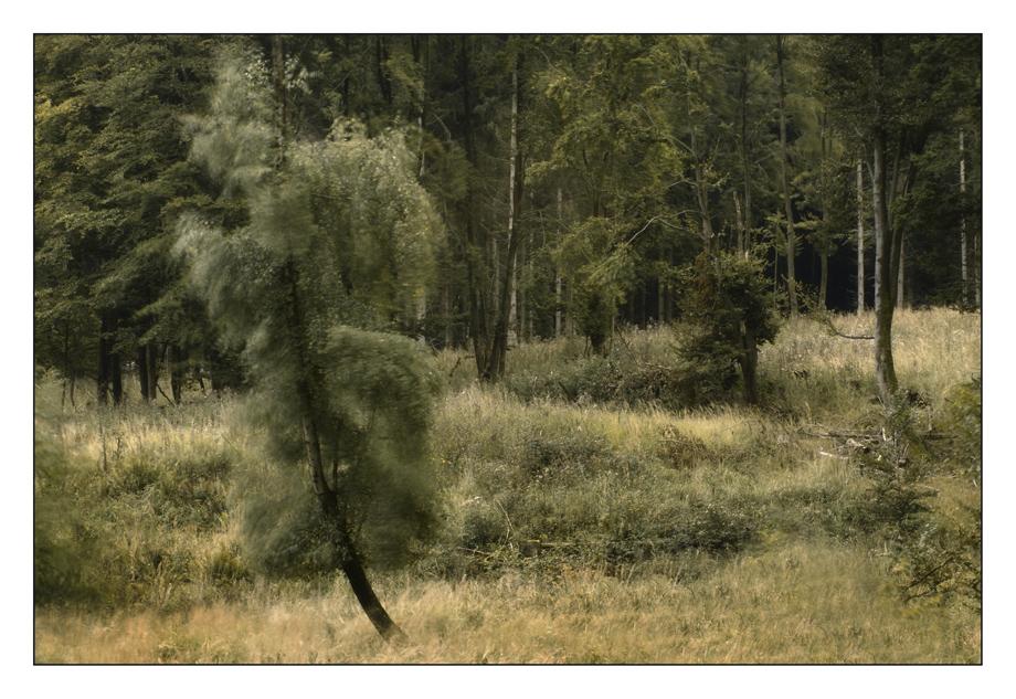 Wind in den Zweigen