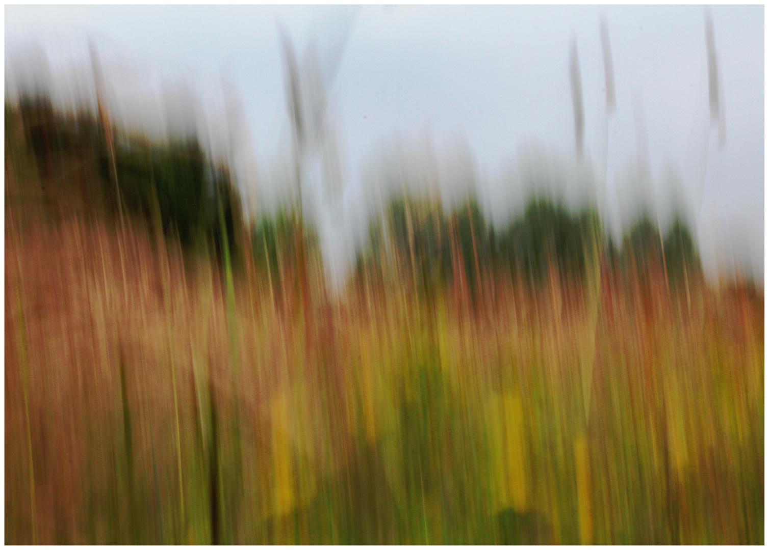 Wind in der hohen Wiese