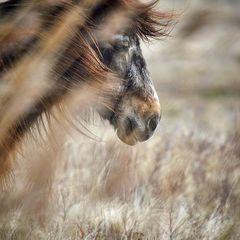 Wind in seinem Haar