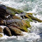 Wind-lashed shoreline