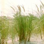 wind, sonne, sand und meer